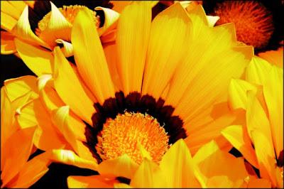 La danza dei fiori, i figli del Sole. di crowlady