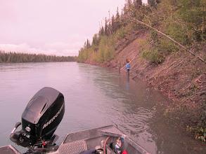 Photo: Fly fishing the high bank in Lower Torpedo on the Kenai river for sockeye salmon.