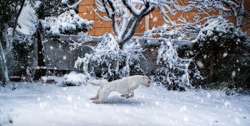 Com'è bello giocare con la neve di germana_de_chellis