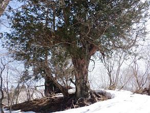 木の周りだけ雪が無く