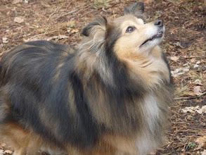 Photo: El gos que ens va acompanyar a l'excursió a la muntanya.