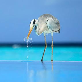 by Felix Hug - Animals Birds