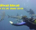 Aliwal Shoal Trip - Sardine Run 22-25 June 2018 : Urban Dive