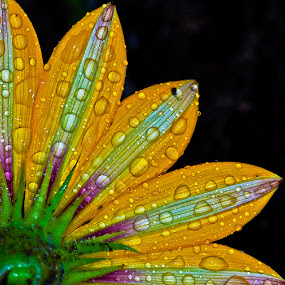 Back of daisy with drops by David Winchester - Nature Up Close Flowers - 2011-2013 (  )