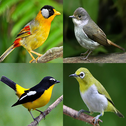 Birds Memory Game file APK Free for PC, smart TV Download