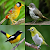 Birds Memory Game file APK for Gaming PC/PS3/PS4 Smart TV
