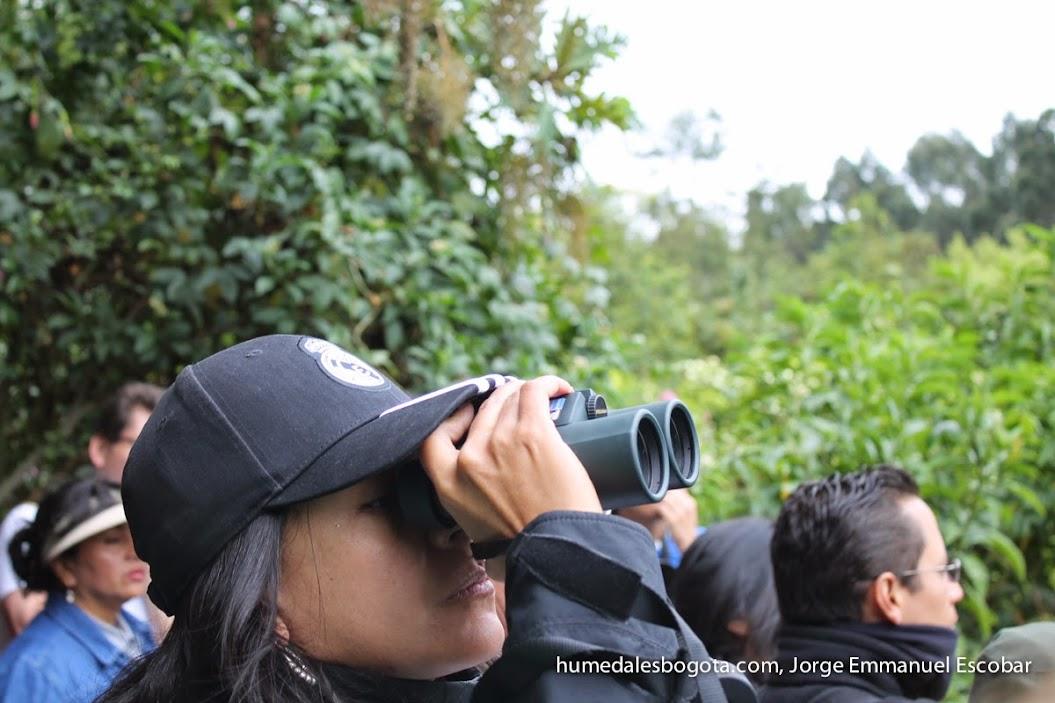 Observación de aves, humedal La Conejera