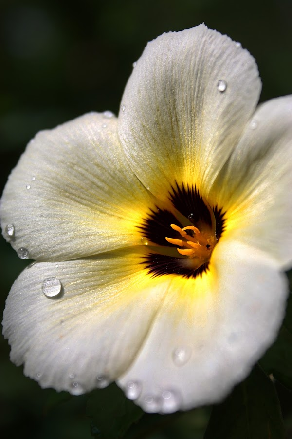 Glowing Flower by Habiburrahman (Abie TheDrummer) - Nature Up Close Flowers - 2011-2013