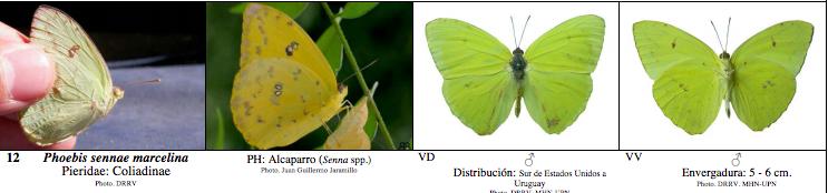 Guía de campo mariposas