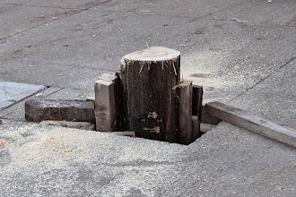 Photo: Bilder rund um den Maibaum - Das Stück bleibt bis zum nächsten Maibaumaufstellen, lt. EU Saatgutverordnung..