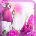 Tulips Drops HD Live Wallpaper icon