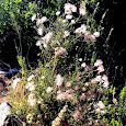 Native Plants of New Mexico & the Desert Southwest