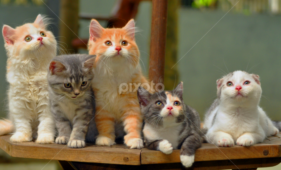 The Family by Cacang Effendi - Animals - Cats Portraits ( cats, cattery, kitten, chandra, animal )