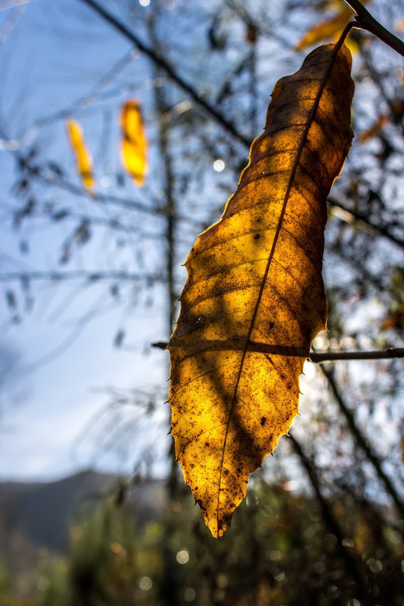 """""""Si sta come d'autunno sugli alberi le foglie"""" di Jiggly"""