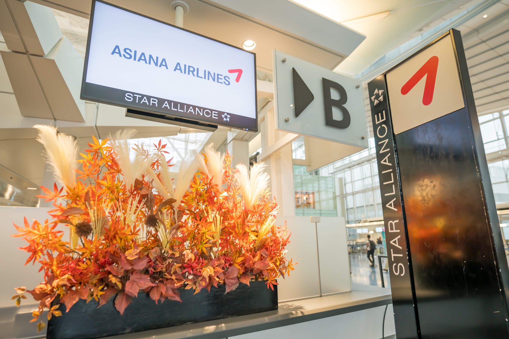 Haneda Airport Asiana Airlines1