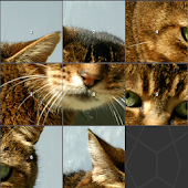Cat Image Slide Puzzle