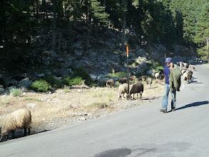 Photo: le berger au portable