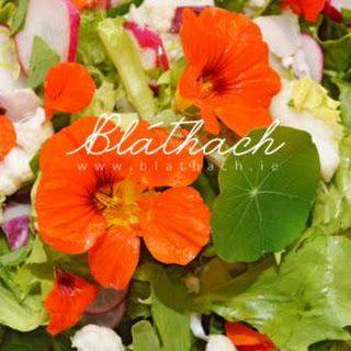 Salad with Nasturtium Petals.
