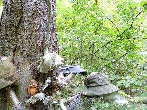 Photo: Винни Пух, лиса, желна, пятнистый олень, собака, кабан