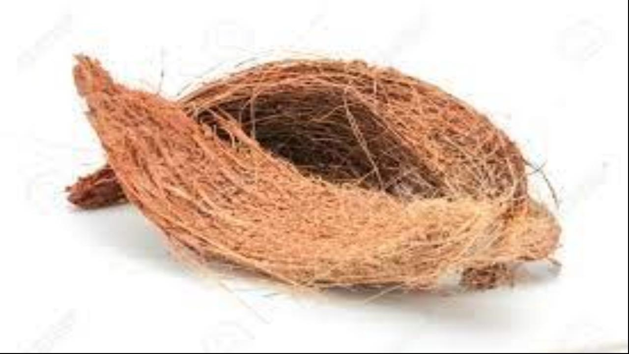 CAN YOU GROW VEGETABLES IN COCONUT COIR