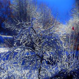 by Donna Schmidt - Landscapes Weather