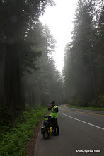 Photo: (Year 2) Day 360 - The Foggy Road and the Redwoods