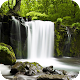 Relax Forest ~ Nature Sounds Android apk
