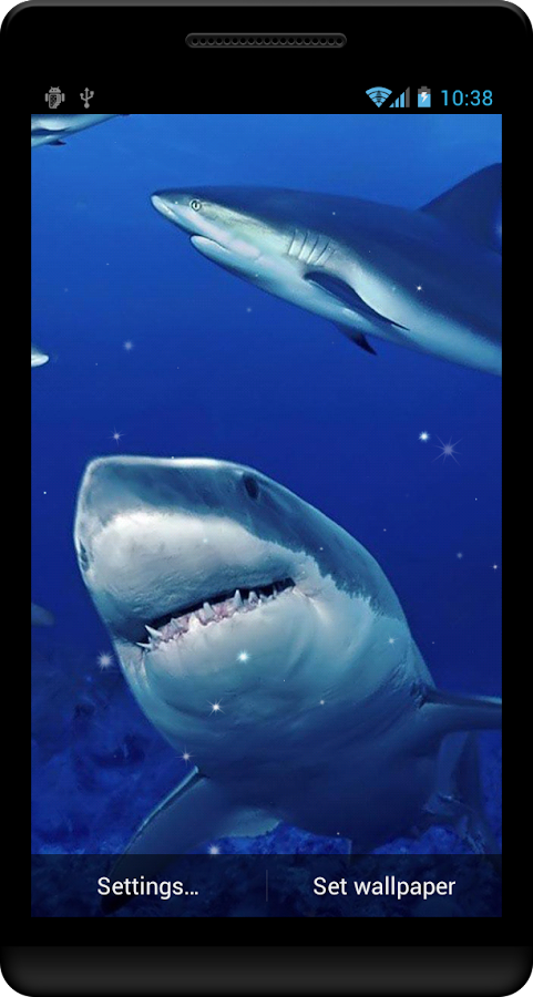 live shark wallpaper - photo #20