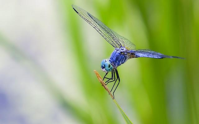Dragonfly - New Tab in HD