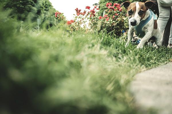Dog seen di andrigna