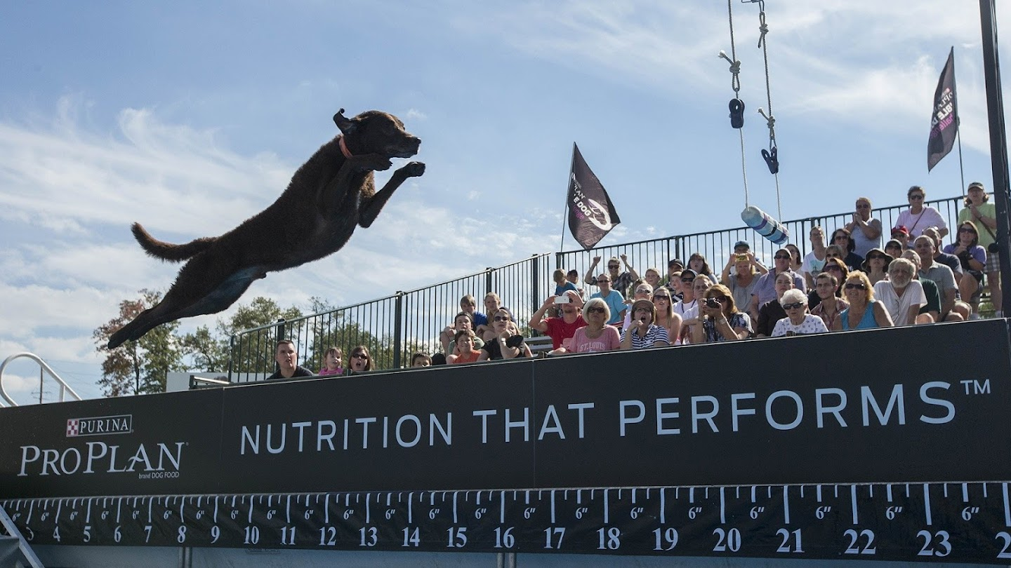 Watch The Incredible Dog Challenge live