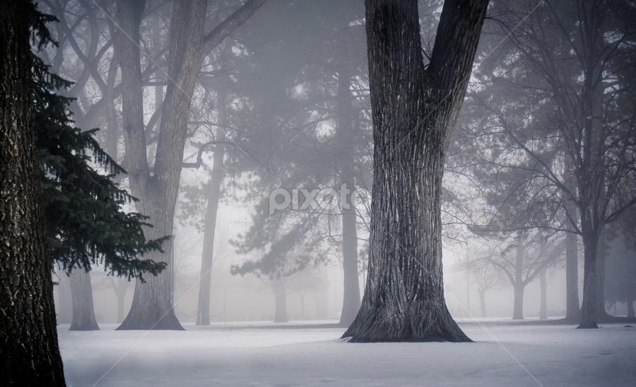 Week 4 - Cold by Daniel Olsen - Landscapes Forests