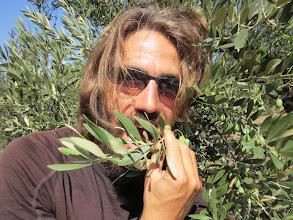 Photo: Tentative de degustation directe d'olive sur rameau. C'est pas bon!!