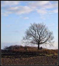 Photo: 10. december 2011 - Træet