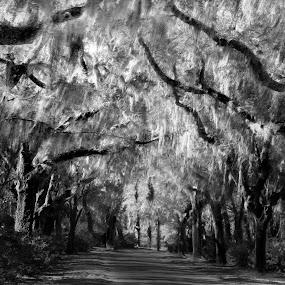 Sleepy Hollow by Karl Cummings - Landscapes Prairies, Meadows & Fields