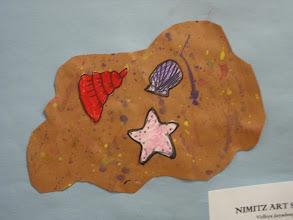 Photo: Shells on the sand Grade 4