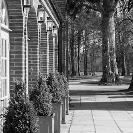 All in a Row by Cecilia McQueen - Black & White Landscapes ( tub, monochrome, black and white, trees, arches,  )