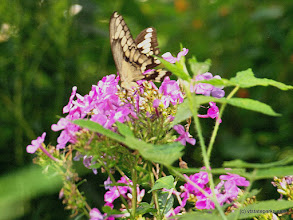 Photo: Butterfly and flowers at Lake St. Catherine State Park by Matt Parsons
