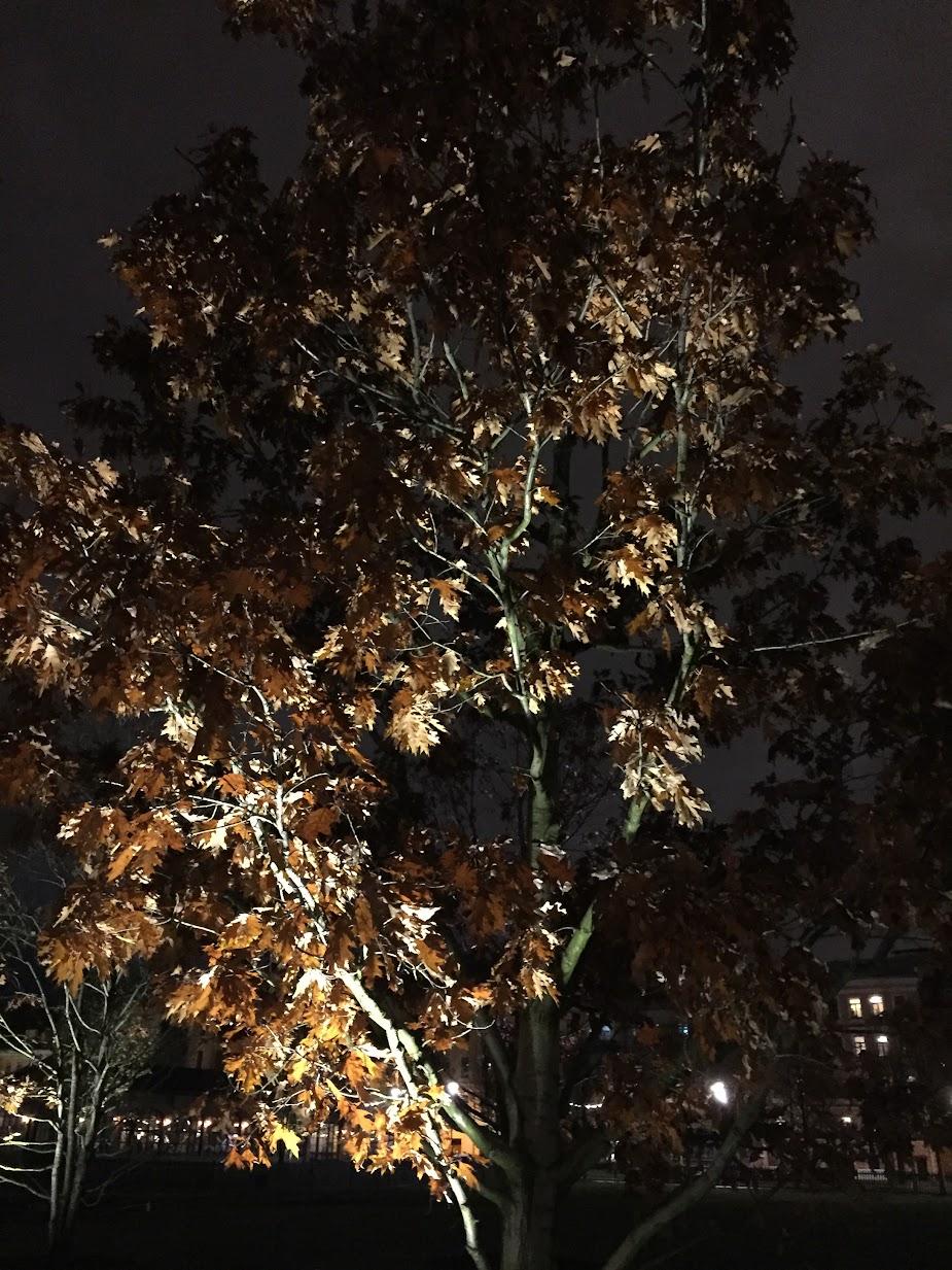 Поздняя осень в Петербурге