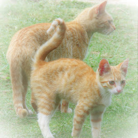 by Geraldine Angove - Animals - Cats Playing
