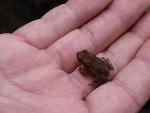Photo: een jong kikkertje