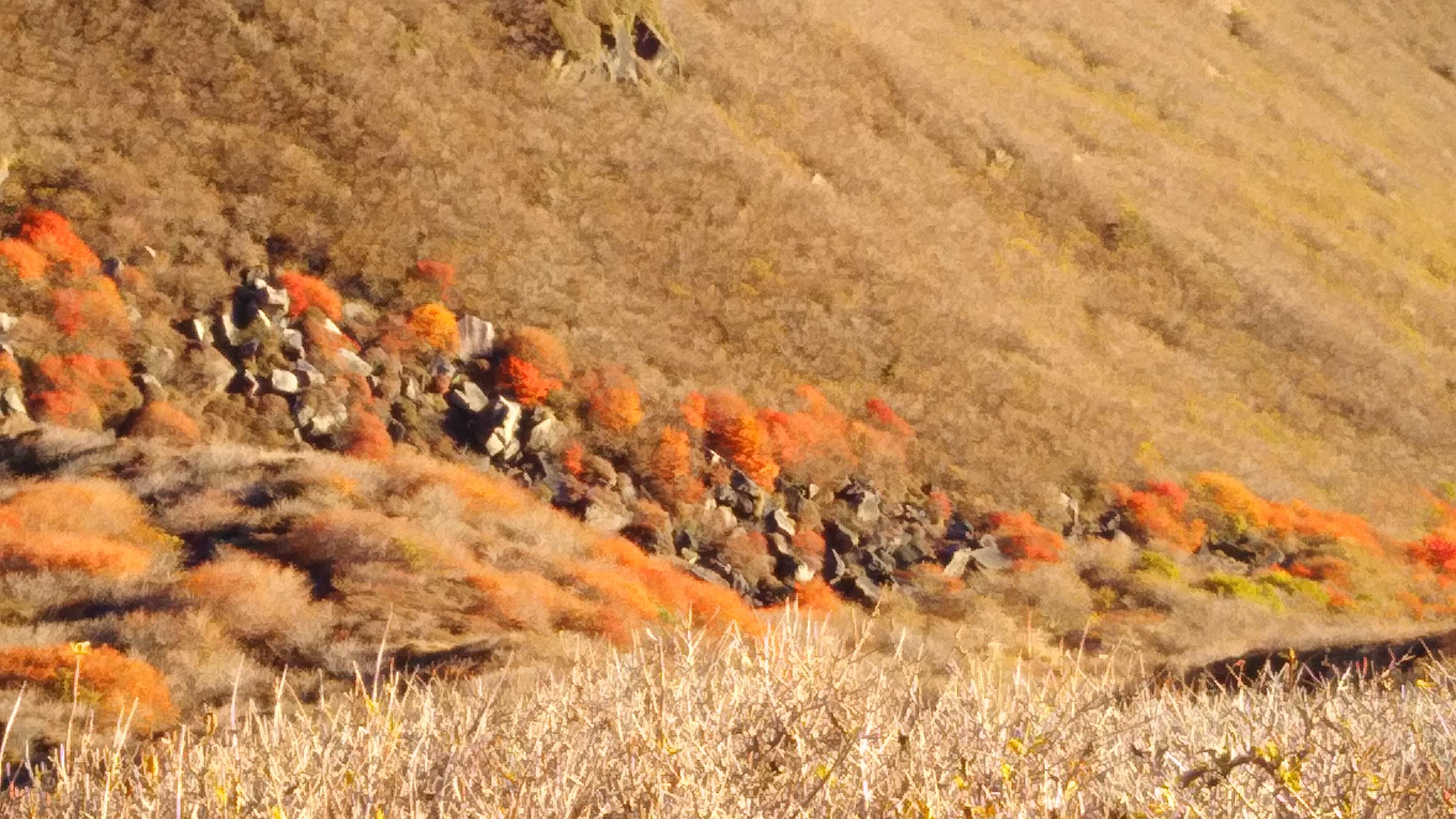 谷間の紅葉