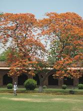 Photo: Orange tree