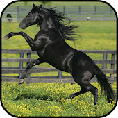 Black Horse Wallpapers