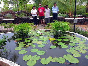Photo: 2011-Lotus pond