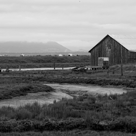 Barn  by Todd Reynolds - Black & White Buildings & Architecture