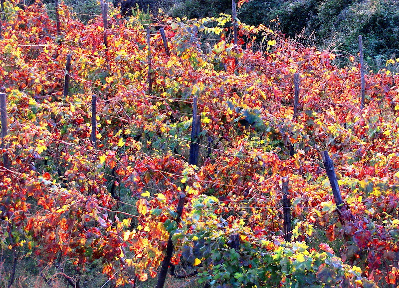 I caldi colori dell'autunno. di Elisabetta Di Girolamo