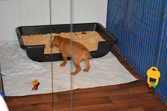 Photo: Checking out their potty box