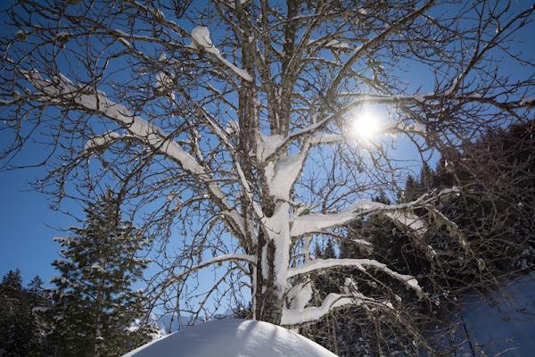 Neve ed albero in Controluce di danchi46