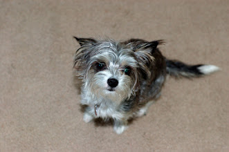 Photo: March 3: Little Dog